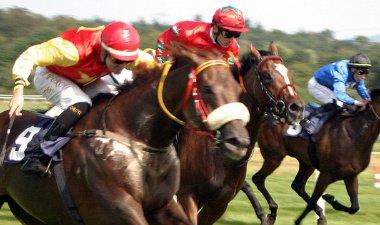 Hesteløp